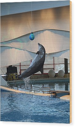 Dolphin Show - National Aquarium In Baltimore Md - 1212236 Wood Print by DC Photographer