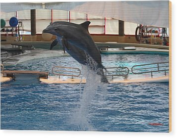 Dolphin Show - National Aquarium In Baltimore Md - 1212248 Wood Print by DC Photographer