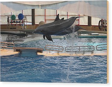 Dolphin Show - National Aquarium In Baltimore Md - 1212250 Wood Print by DC Photographer