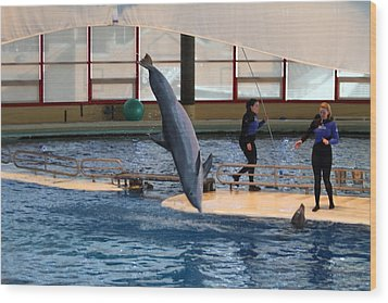 Dolphin Show - National Aquarium In Baltimore Md - 121226 Wood Print by DC Photographer