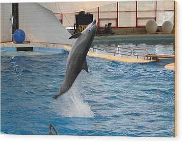 Dolphin Show - National Aquarium In Baltimore Md - 1212263 Wood Print by DC Photographer
