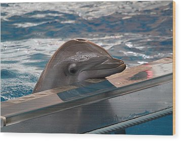 Dolphin Show - National Aquarium In Baltimore Md - 1212280 Wood Print by DC Photographer
