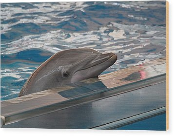 Dolphin Show - National Aquarium In Baltimore Md - 1212282 Wood Print by DC Photographer