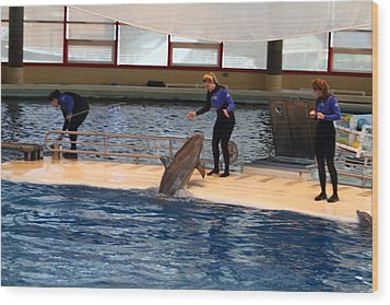 Dolphin Show - National Aquarium In Baltimore Md - 121231 Wood Print by DC Photographer