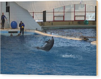Dolphin Show - National Aquarium In Baltimore Md - 121258 Wood Print by DC Photographer