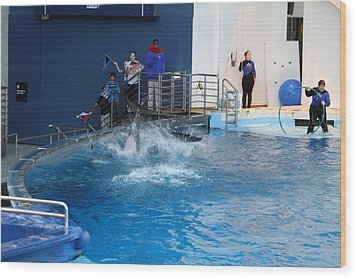 Dolphin Show - National Aquarium In Baltimore Md - 121292 Wood Print by DC Photographer