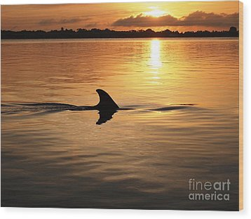 Dolphin Sunrise Wood Print by Fred Benavidez