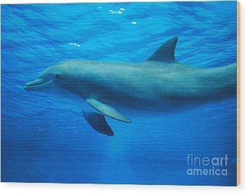 Dolphin Underwater Wood Print by DejaVu Designs