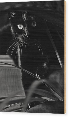 Domestic Black Panther Wood Print