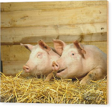 Domestic Pigs Wood Print by Hans Reinhard