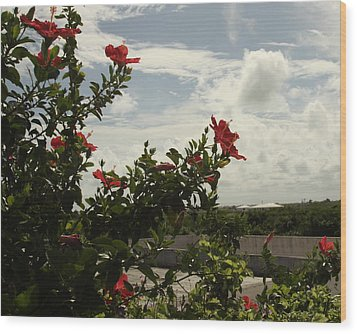 Dominican Red Flower Wood Print by Mustafa Abdullah