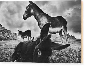 Donkey Family Wood Print by Yuri Santin