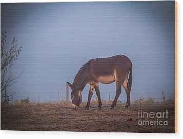 Donkey In The Fog Wood Print by Robert Bales