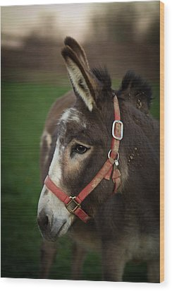 Donkey Wood Print by Shane Holsclaw