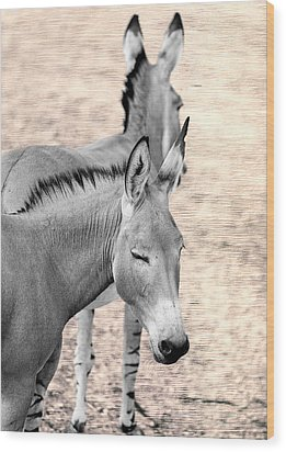 Donkeyflected Wood Print by Bill Tiepelman