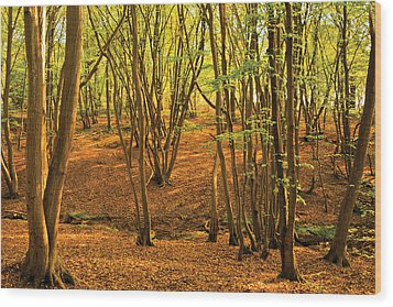 Wood Print featuring the photograph Donyland Woods by David Davies