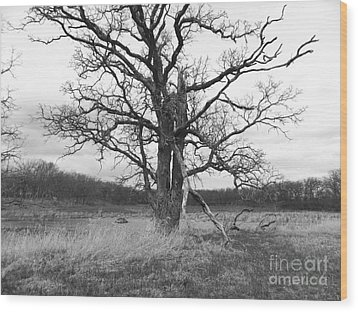 Dormant Beauty Bw Wood Print