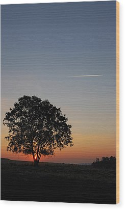 Dorset Dawn Wood Print by Wendy Wilton