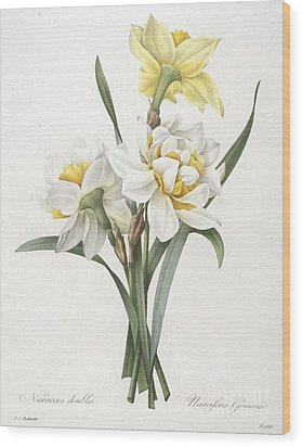 Double Daffodil Wood Print by Pierre Joseph Redoute
