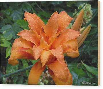 Double Orange Daylily Wood Print by Sandra Estes