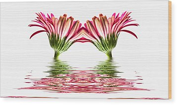 Double Pink Gerbera Flood Wood Print by Steve Purnell
