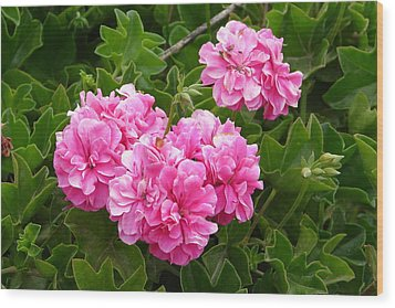 Wood Print featuring the photograph Double Pink by Lew Davis