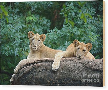 Double Trouble Wood Print by Lisa L Silva