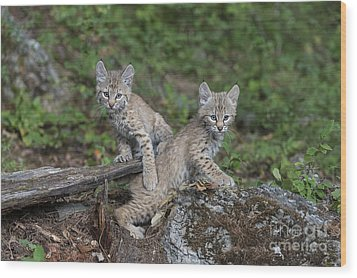 Double Trouble Wood Print by Sandra Bronstein