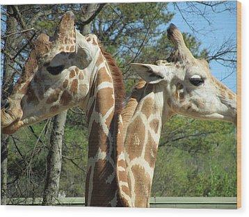 Giraffes With A Twist Wood Print