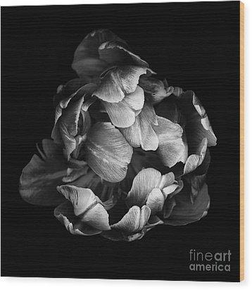 Double Tulip Wood Print by Oscar Gutierrez