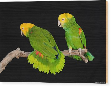Wood Print featuring the photograph Double Yellow-headed Amazon Pair by Avian Resources