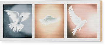 Dove In Flight Triptych Wood Print
