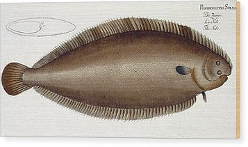 Dover Sole Wood Print by Andreas Ludwig Kruger