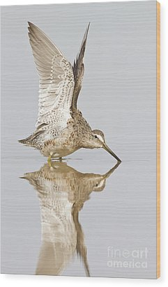 Dowitcher Wing Stretch Wood Print by Bryan Keil