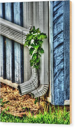 Downspout Wood Print by Doc Braham