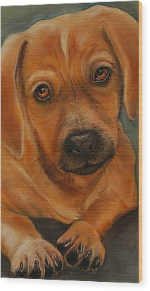 Doxie Wood Print by Jean Cormier
