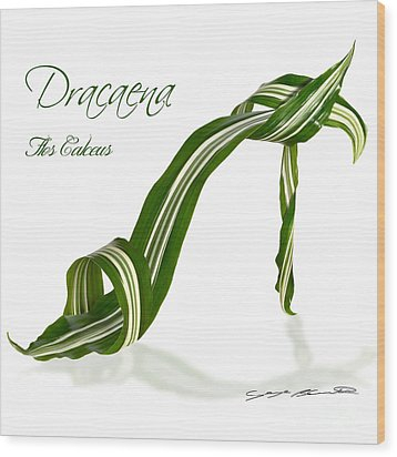 Dracaena Flos Calceus Wood Print by Blanchette Photography