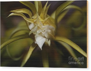 Wood Print featuring the photograph Dragon Flower by David Millenheft