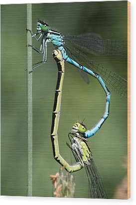 Dragon Fly Wood Print