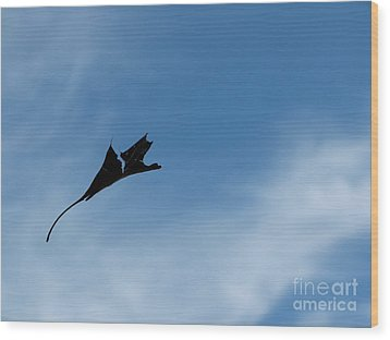Wood Print featuring the photograph Dragon In Flight by Jane Ford