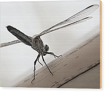 Wood Print featuring the photograph Dragon Of The Air  by Micki Findlay