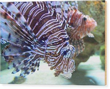 Dragonfish In Tandem Wood Print by Sandi OReilly
