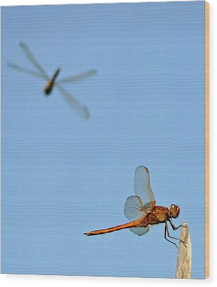 Wood Print featuring the photograph Dragonflies by Jim Whalen