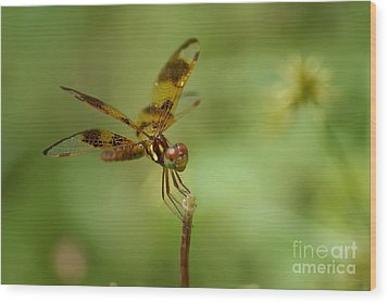 Wood Print featuring the photograph Dragonfly 2 by Olga Hamilton
