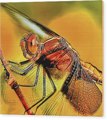 Dragonfly 2 Wood Print by William Horden