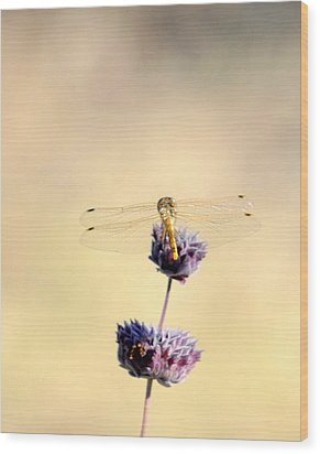 Wood Print featuring the photograph Dragonfly by AJ  Schibig