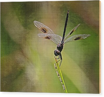 Wood Print featuring the photograph Dragonfly And Friends by Dawn Currie
