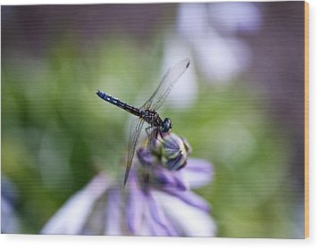 Dragonfly Wood Print by Christopher McPhail