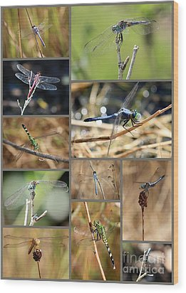 Dragonfly Collage Wood Print by Carol Groenen