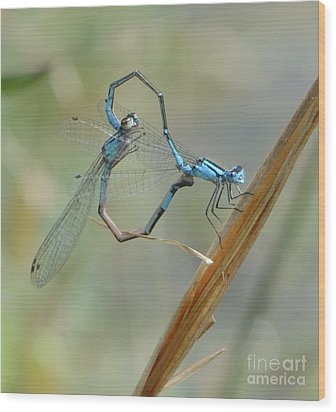 Dragonfly Courtship Wood Print